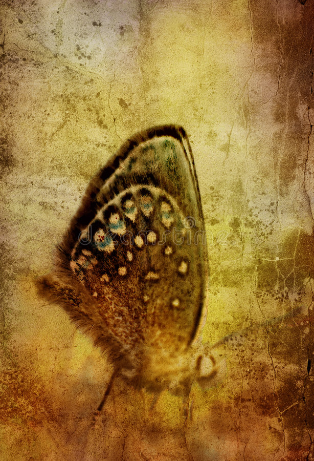 Grunge butterly imagens de stock royalty free