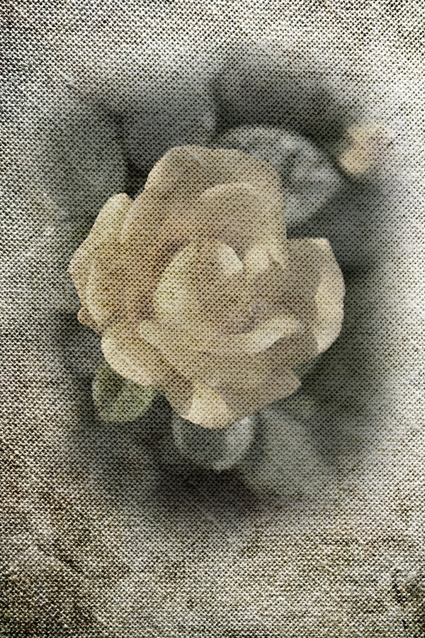 Grunge canvas with rose stock images
