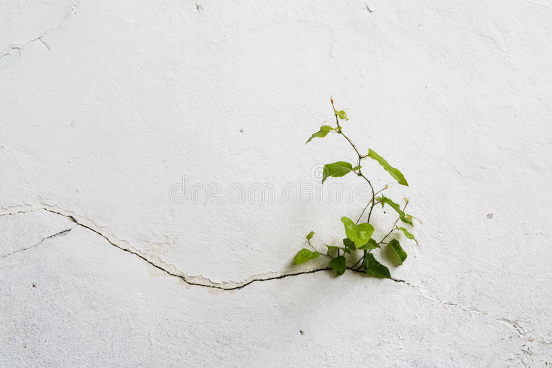 Grunge concrete wall and green plant, background and texture. vintage tone stock photography