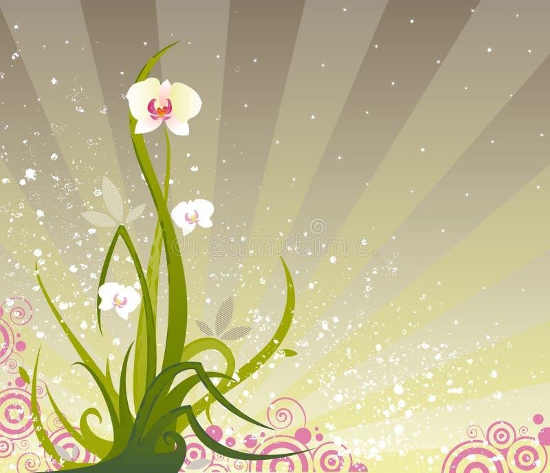 Grunge d'orchidée illustration stock