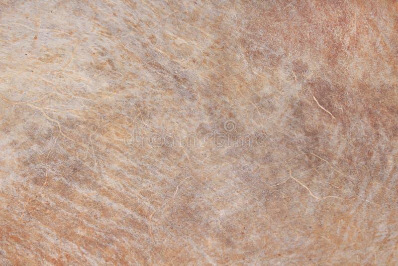 Grunge de cru de tambour brun, texture en cuir de modèles de nature pour le fond photos libres de droits