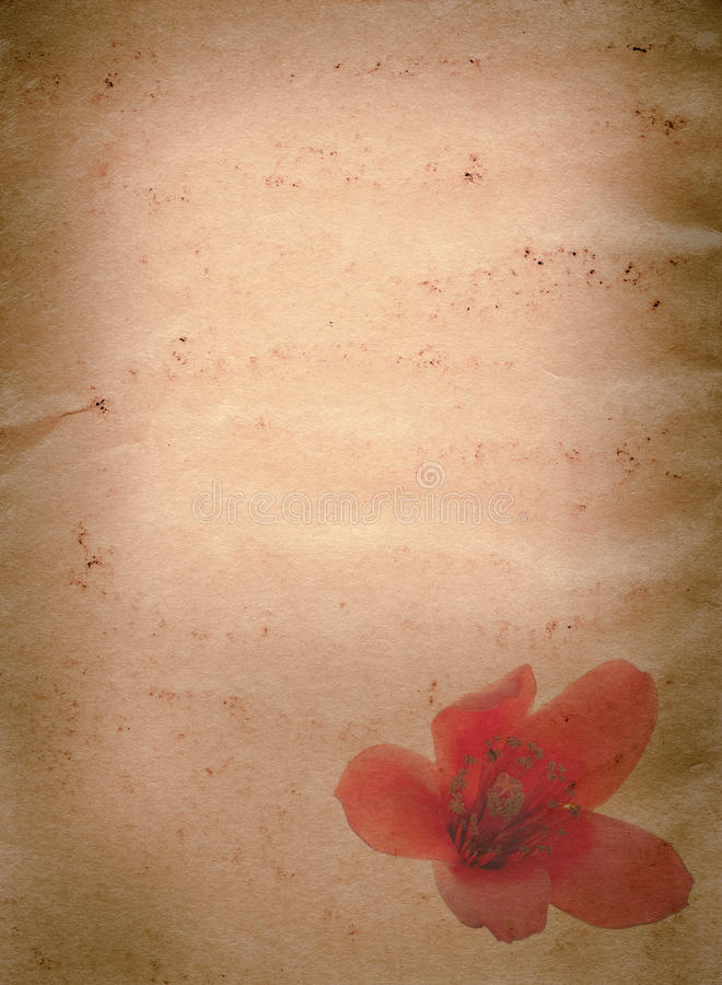 Grunge del fiore rosso del ceiba del Bombax vecchio fotografia stock libera da diritti