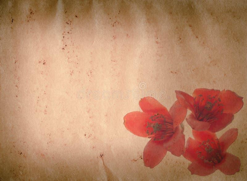 Grunge del fiore rosso del ceiba del Bombax vecchio fotografie stock