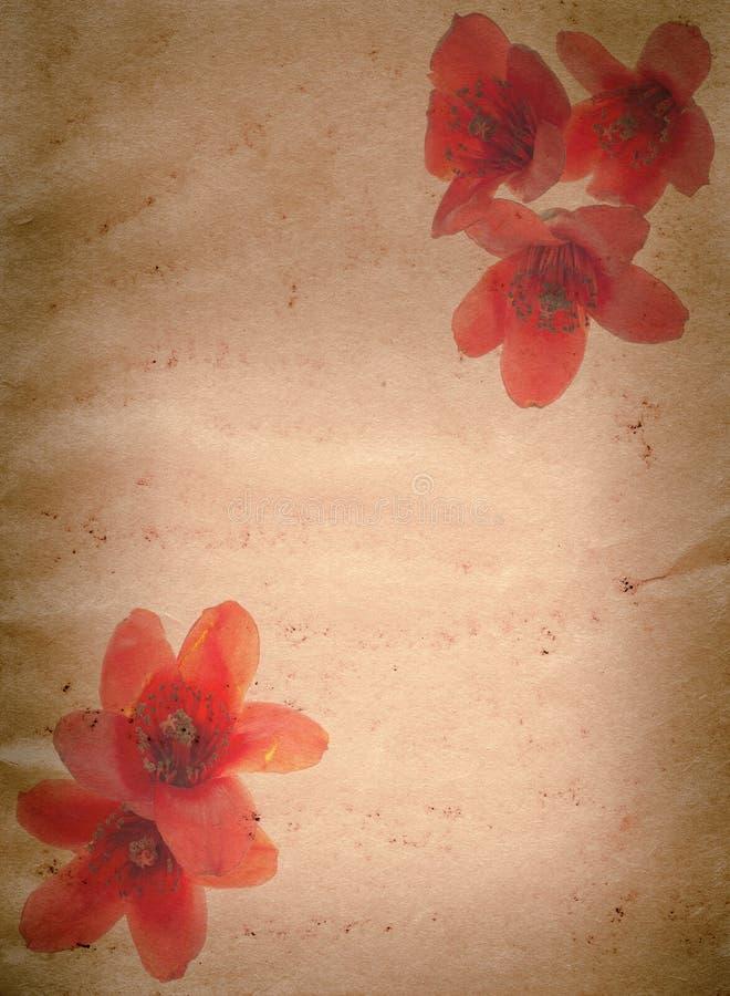 Grunge del fiore rosso del ceiba del Bombax vecchio fotografie stock libere da diritti