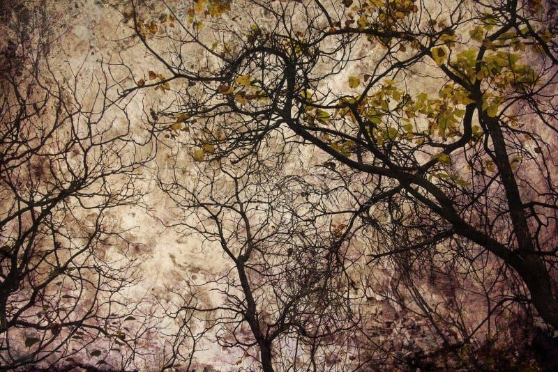 Grunge del otoño imagenes de archivo