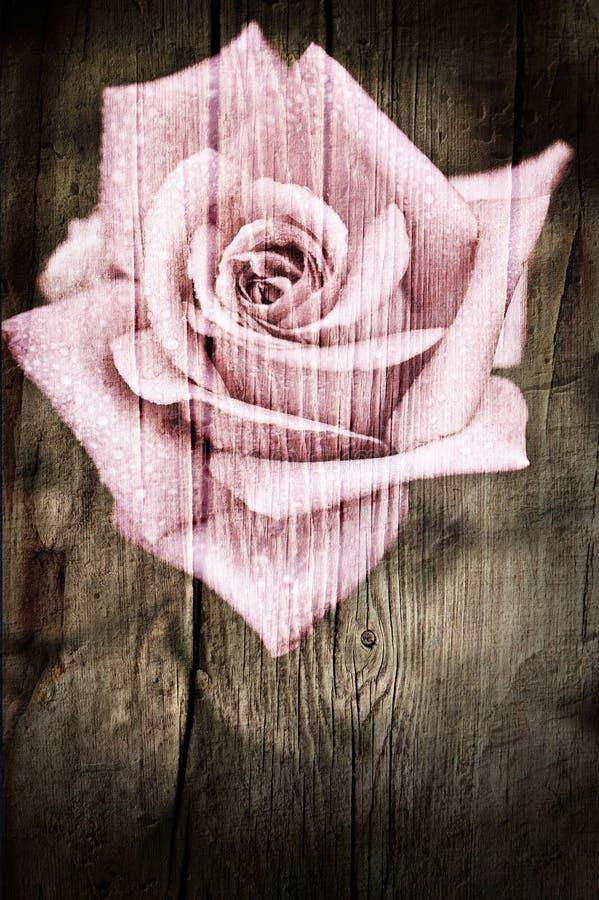 Grunge drewniana tekstura z róża kwiatem obrazy stock