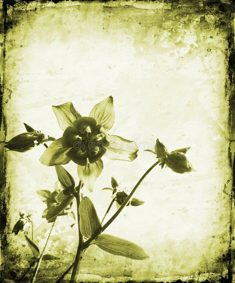 Download Grunge floral stock de ilustración. Ilustración de watercolor - 1286678