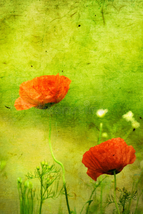 Grunge floral background with poppies vector illustration