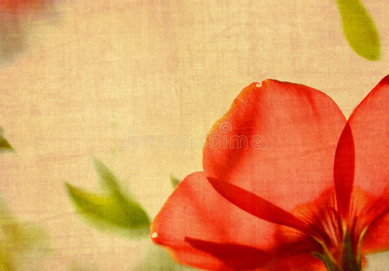 Grunge flower stock images