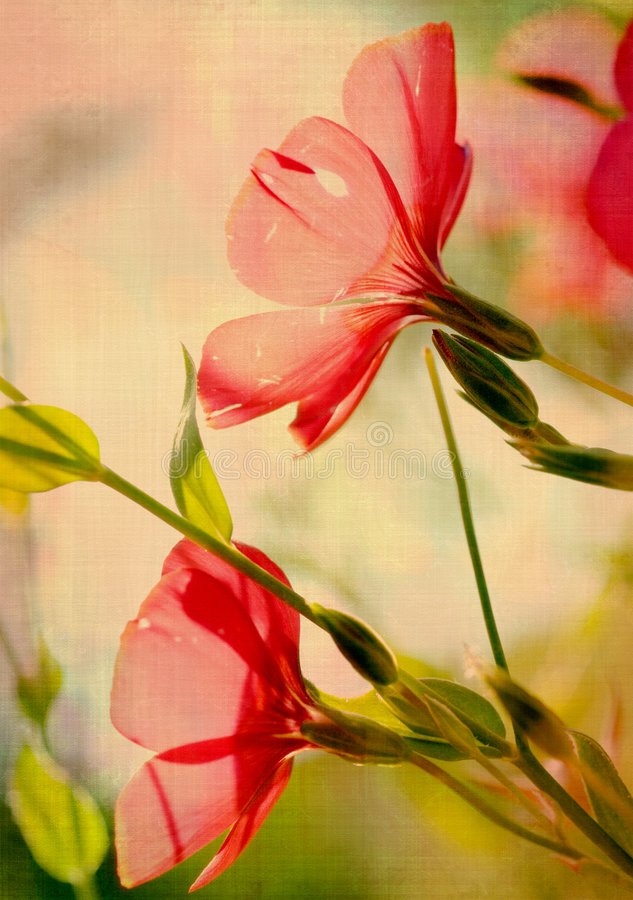Download Grunge flower stock photo. Image of close, artistic, plant - 6661306