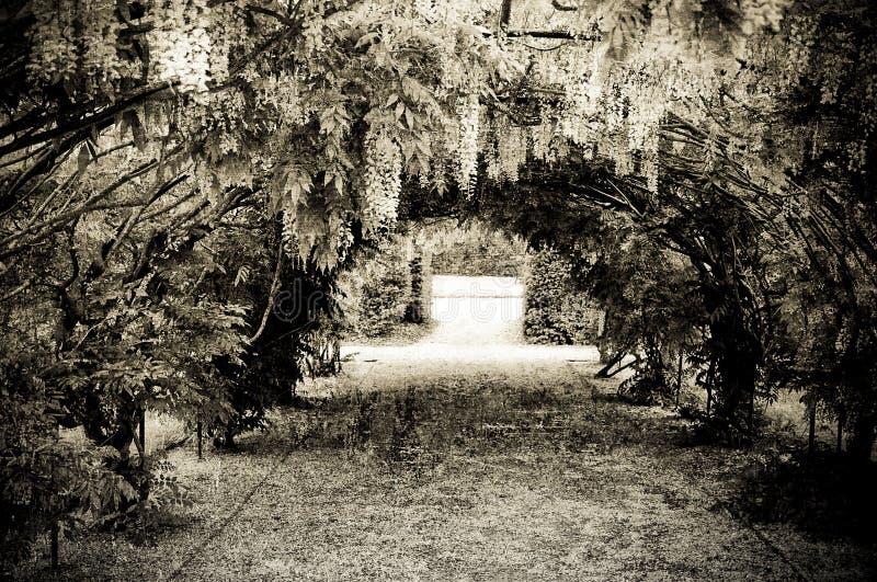 Grunge Garten lizenzfreie stockfotografie