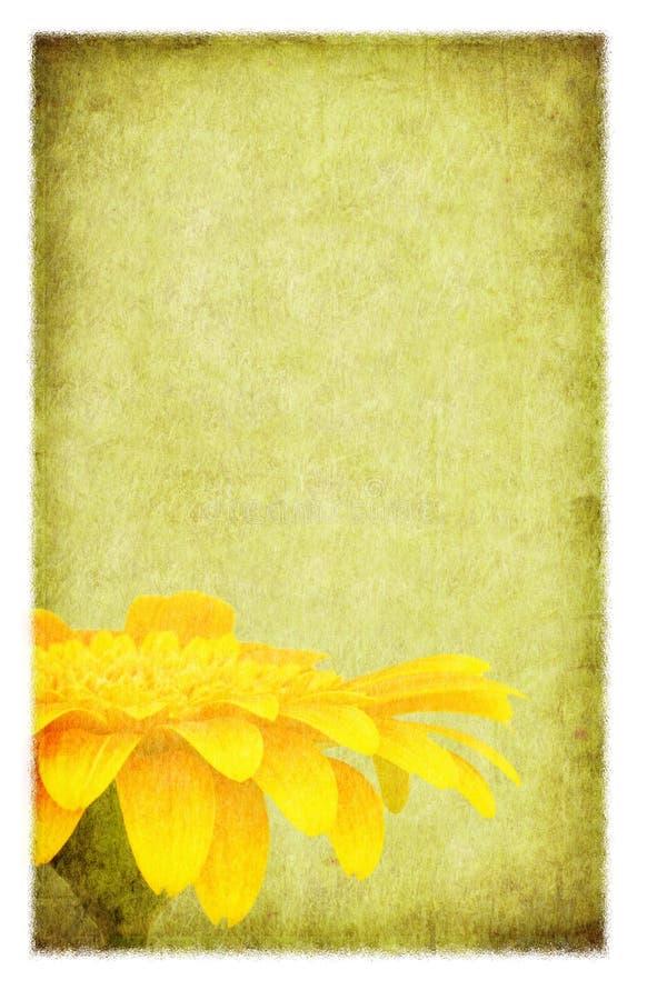 Download Grunge Gerbera Daisy stock illustration. Illustration of weathered - 7014961