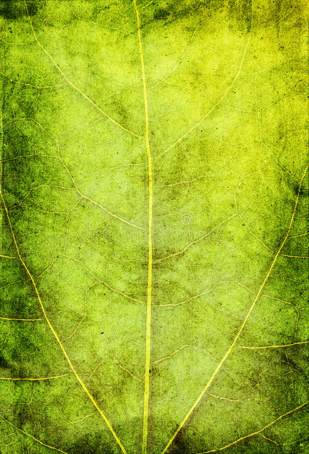 Grunge green background stock image
