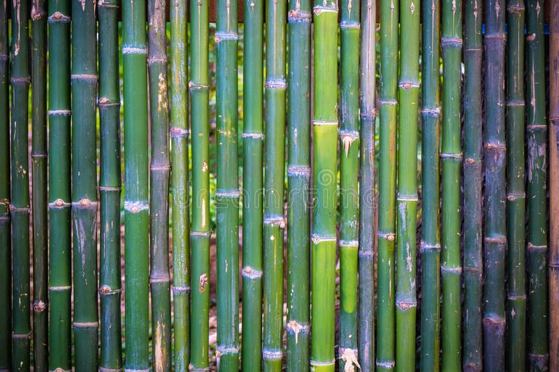Grunge green bamboo fence,texture background royalty free stock images