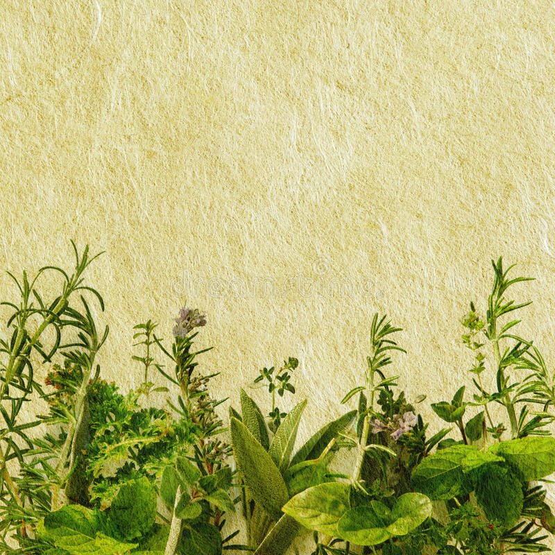 Grunge Herbs. Fresh herbs in a border combined with textured paper to give a grunge effect
