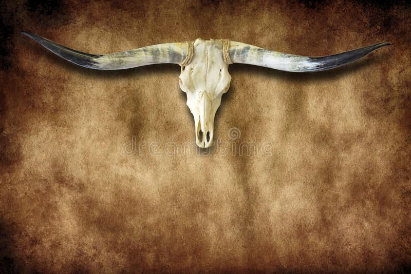 Bull Horns And Skull Grunge With Copy Space. Grunge image of bull horns and skull with copy space for message or menu royalty free stock photos