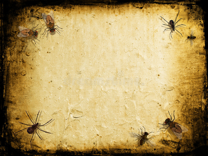 Grunge insects. Grunge background with spiders and flies royalty free illustration