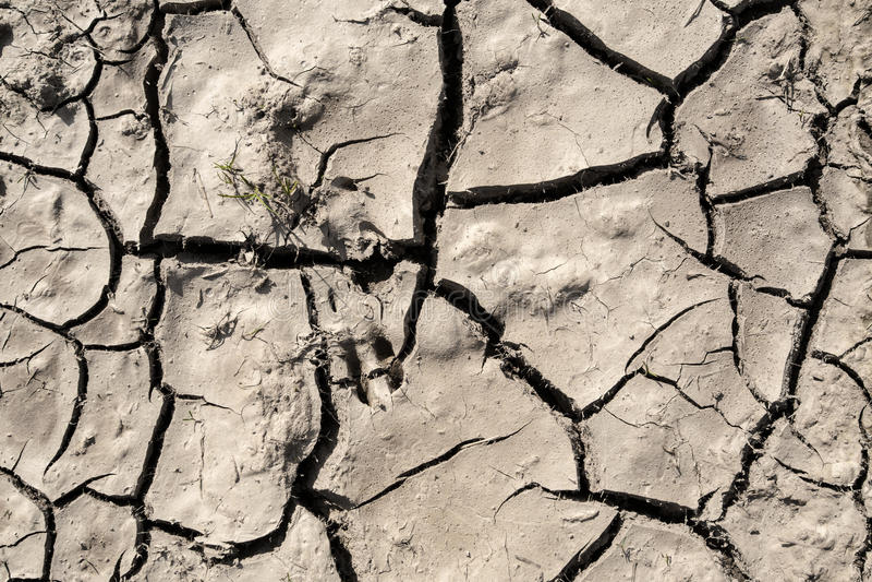 Grunge mud cracks texture royalty free stock photos