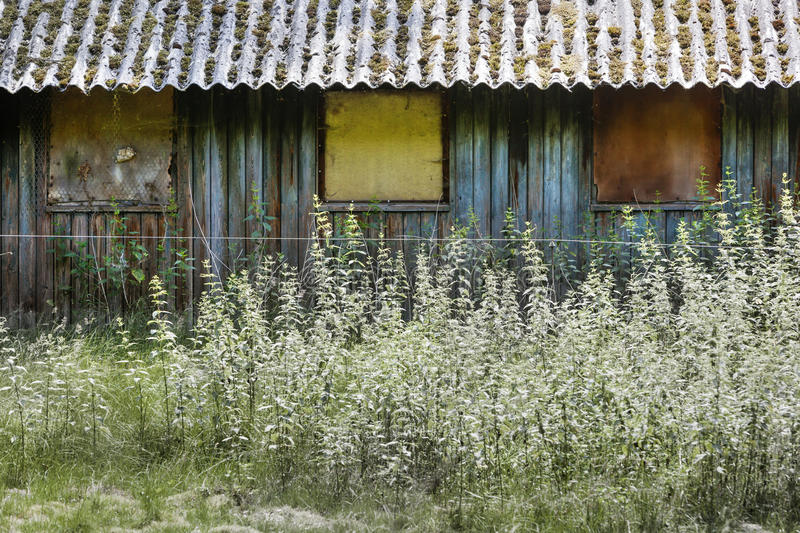 Grunge old barn. With nettles in front stock images