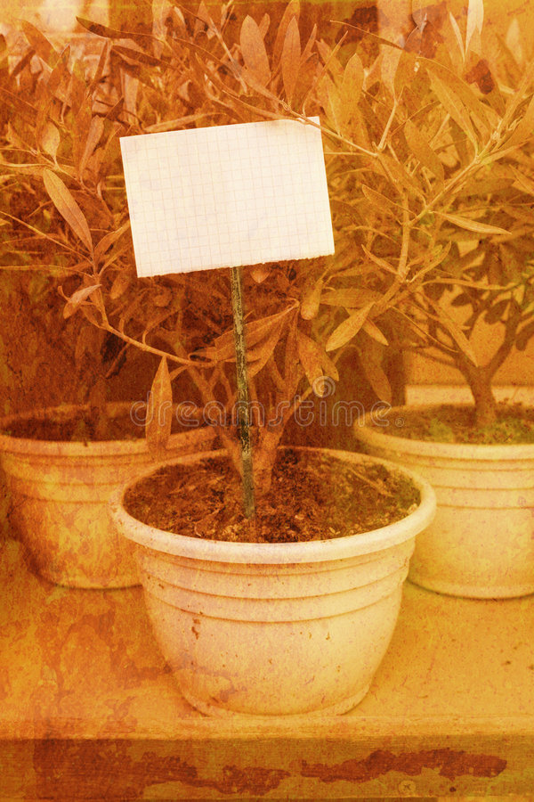 Download Grunge Olive Tree With A Note Stock Photo - Image of layered, antique: 509394