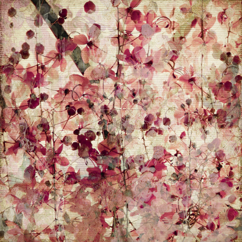 Free Grunge Pink Blossom Bamboo Antique Background Royalty Free Stock Photos - 14254048