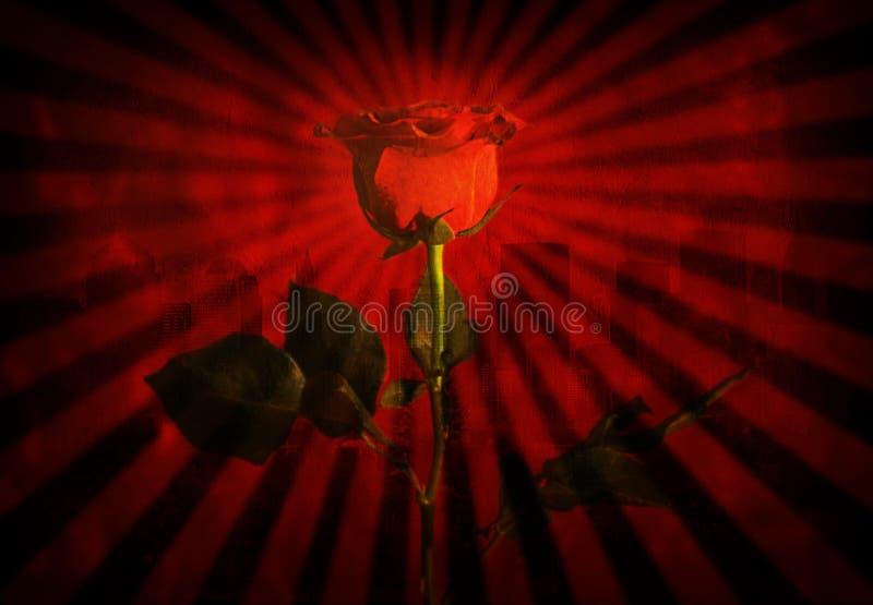 Download Grunge red rose stock image. Image of graphic, metropolis - 3089725