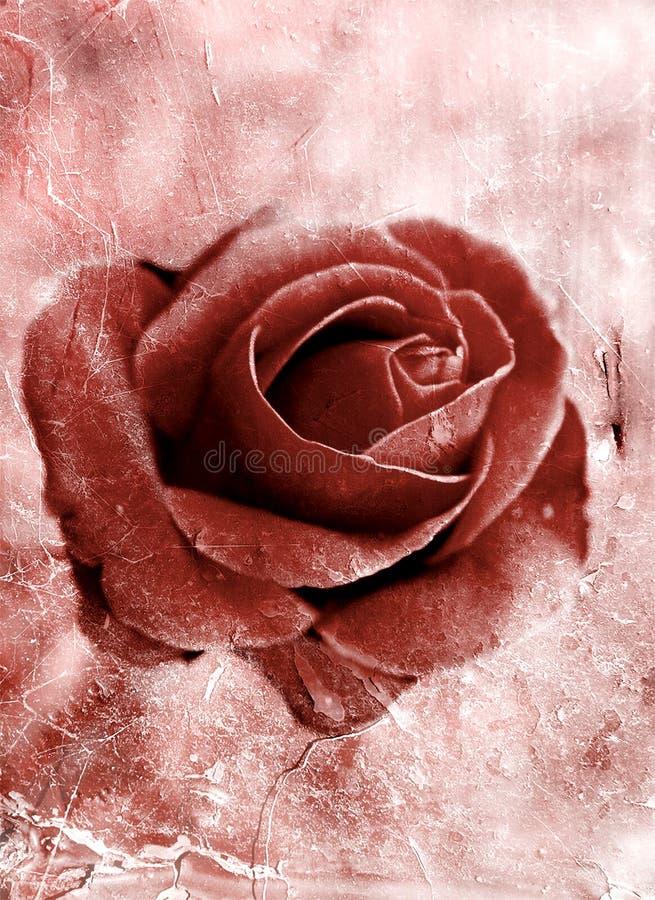 Download Grunge rose 0801 stock illustration. Illustration of love - 7701689