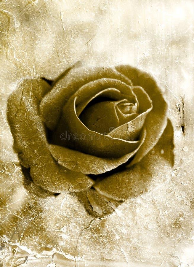 Grunge rose 0801 stock photo