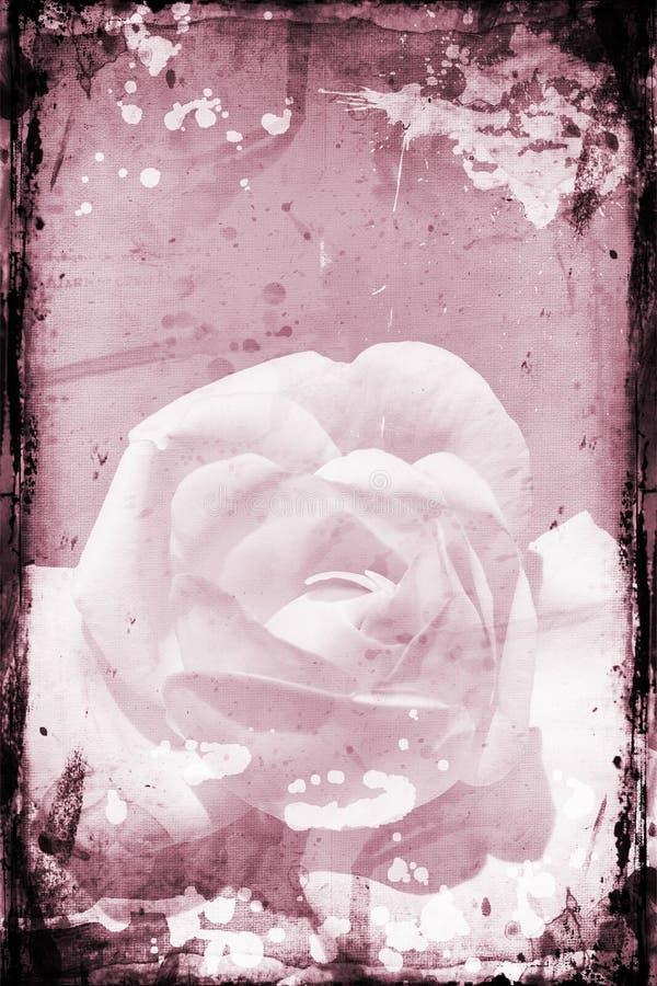 Grunge rose royalty free illustration