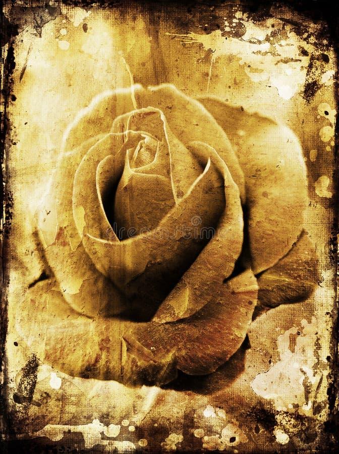 Grunge rose vector illustration