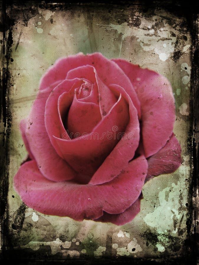 Download Grunge rose stock illustration. Image of grunge, nature - 2361228