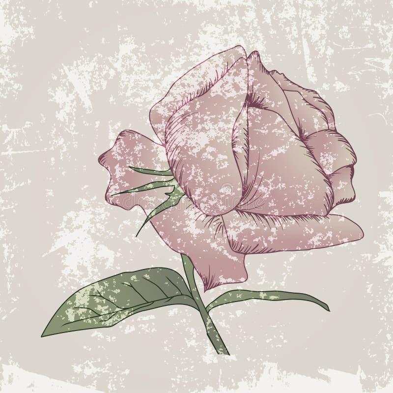 Grunge Rose Background do vintage ilustração do vetor