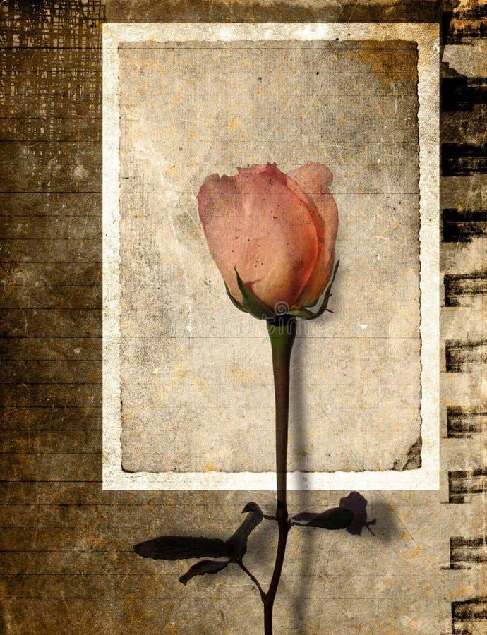 Grunge Rose Postkarte lizenzfreie stockbilder