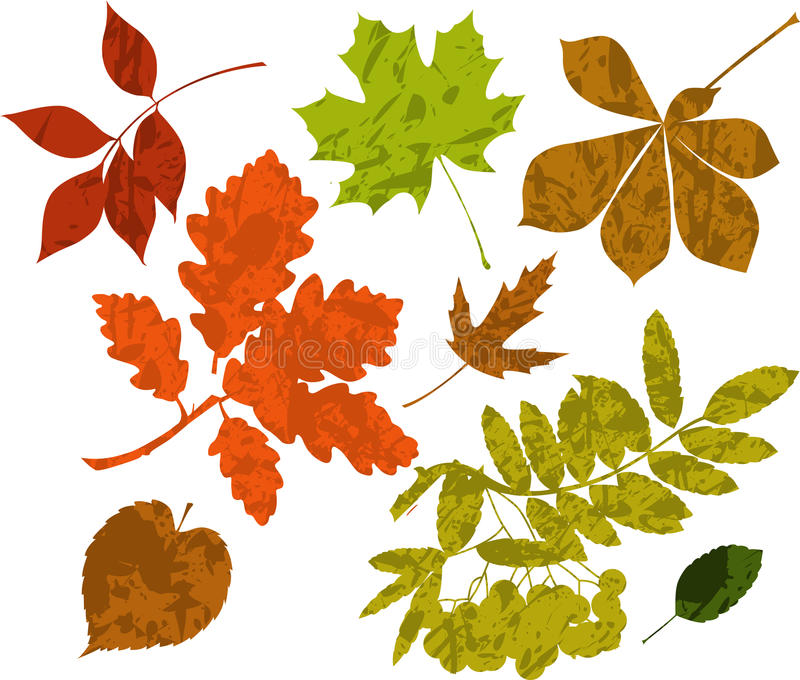 Grunge Schattenbilder der Blätter. vektor abbildung