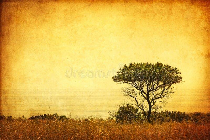grunge sepia drzewo obraz royalty free