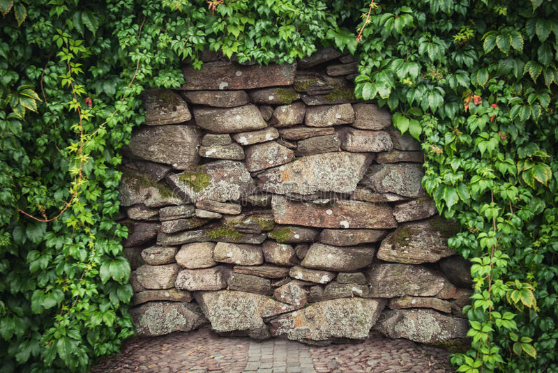 Grunge stone wall background with climbing plant. Hopeless concept stock image