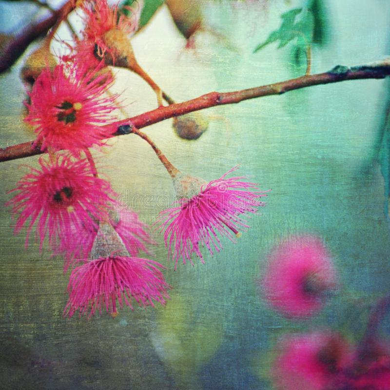Grunge textured różowy kwiatonośny dziąsło obraz royalty free