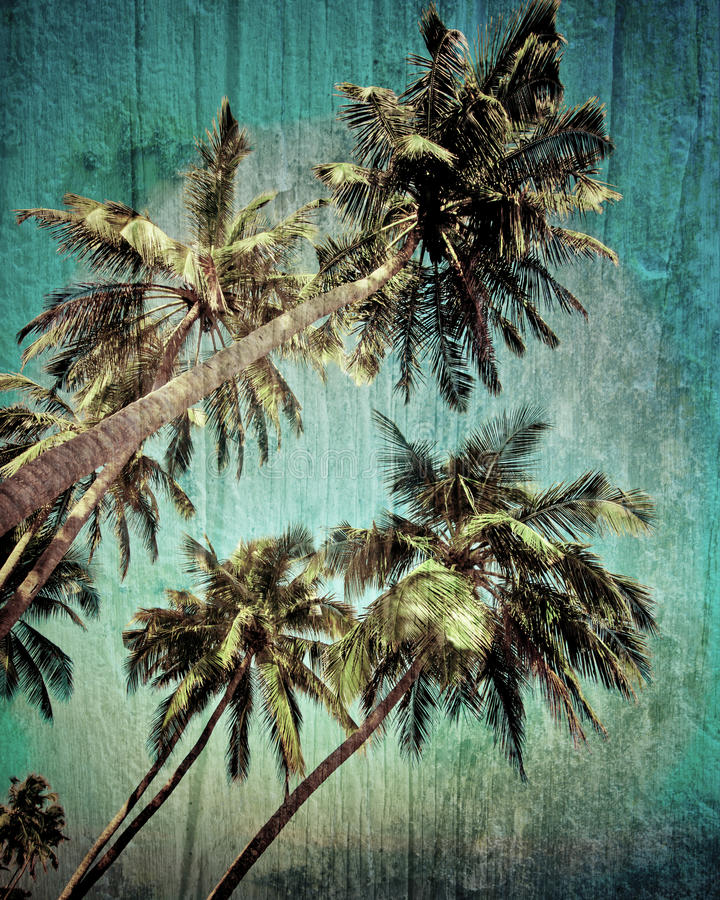 Grunge Tropical Background With Coconut Palm Tree Stock Photo