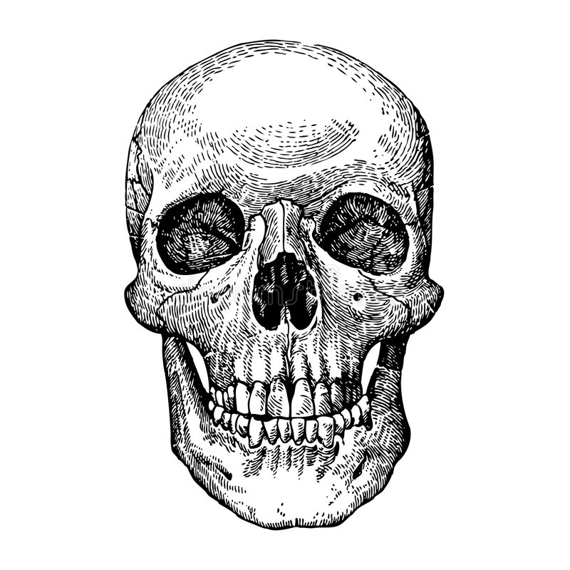 Grunge vector skulls. AI vector. Size and color can be changed royalty free illustration