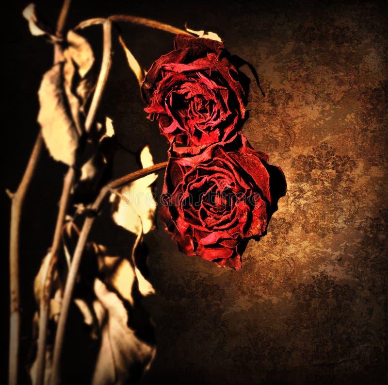 Grunge verwelkte rozengrens royalty-vrije stock afbeeldingen