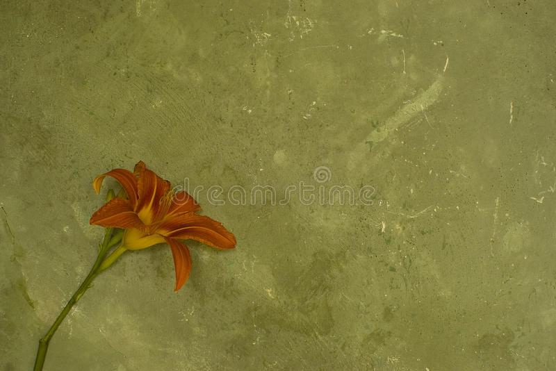 Grunge wall with flower. And empty space for backgrounds stock images