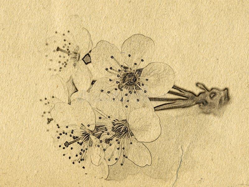 Grungeachtergrond met document textuur en de tak van de kersenboom met bloemen stock illustratie