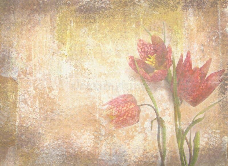 Grungetextuur met uitstekende bloemenachtergrond Nederlandse tulpen royalty-vrije stock foto's
