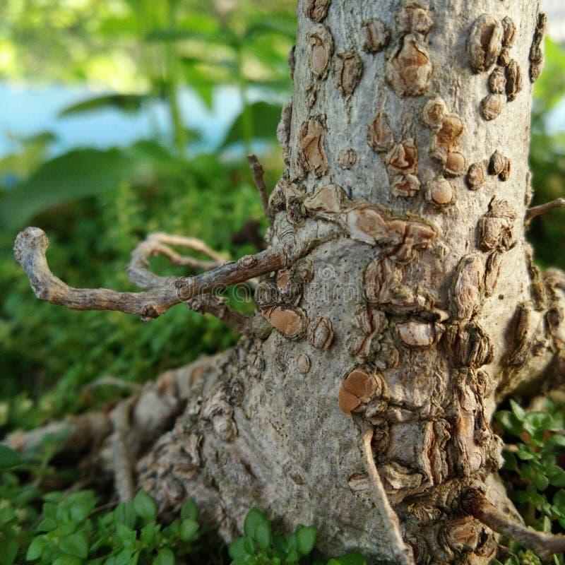 Grungeträdstam fotografering för bildbyråer