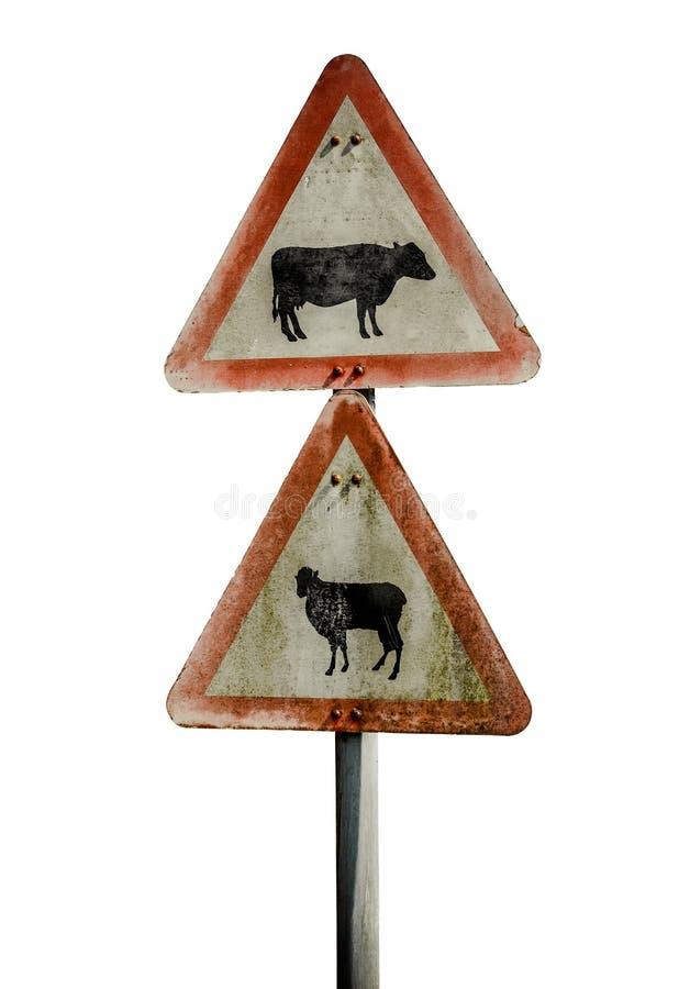 Grungy предупредительный знак скотин Великобритании стоковая фотография rf