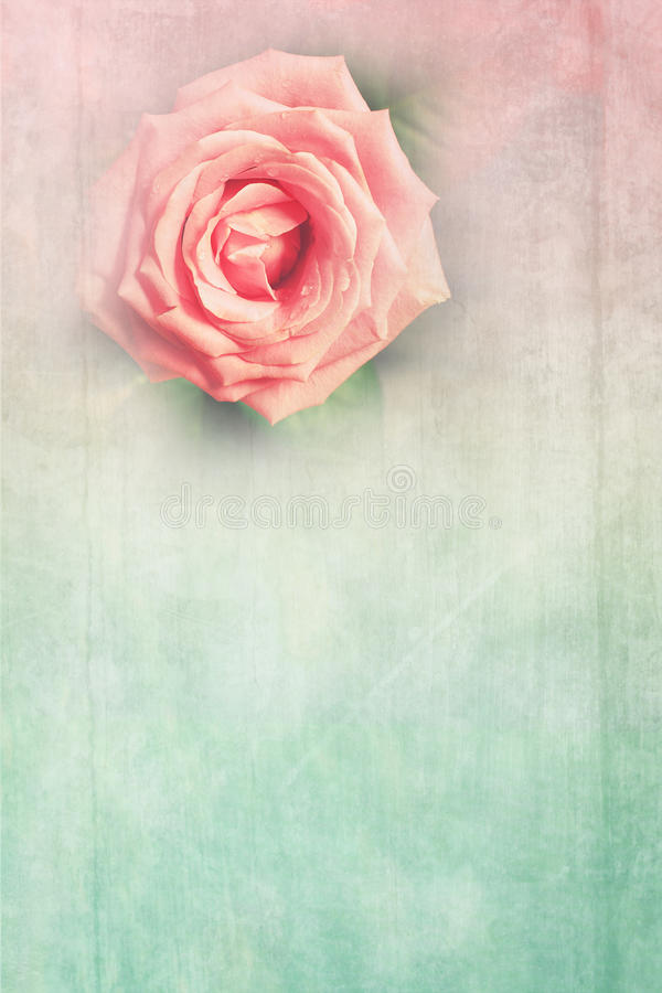 Grungy background with pink rose stock photo
