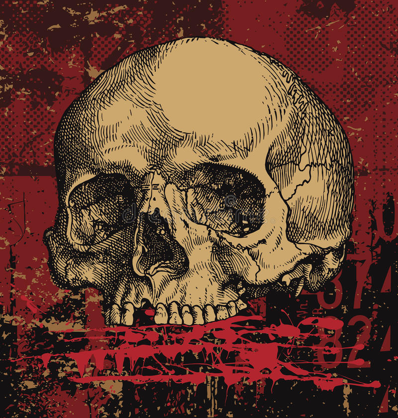 Download Grungy human skull stock vector. Image of grunge, illustrated - 14679092
