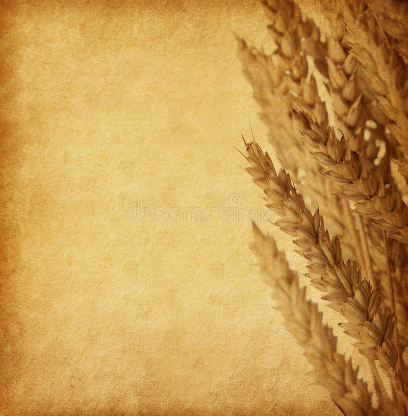 Grungy old paper. With Wheat ears royalty free stock image