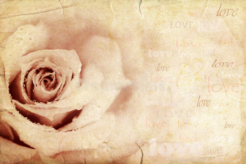 Grungy rose background. Holiday festive card with love text stock photo