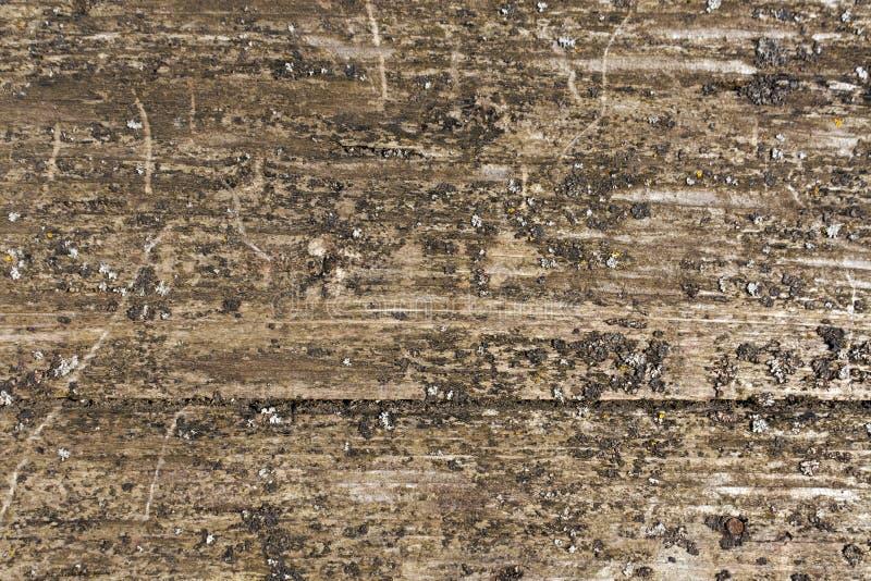 Grungy träboradyttersida med mossa arkivbild